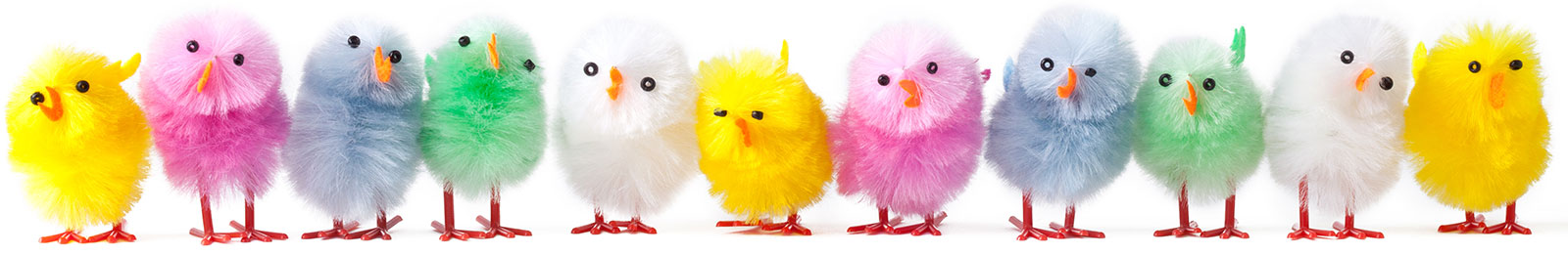 Colourful Chicks - Early Bird Register Banner